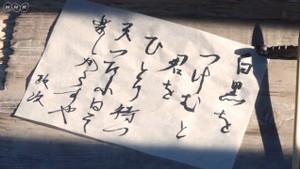 Taiga223